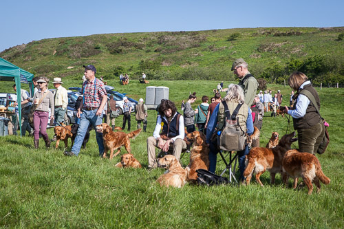 Golden Retriever Club 150th Anniversary Working Test-2