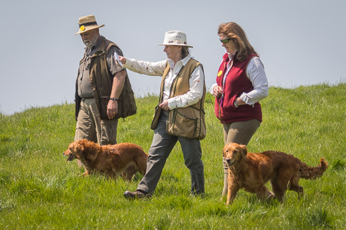 Golden Retriever Club 150th Anniversary Working Test-5_1